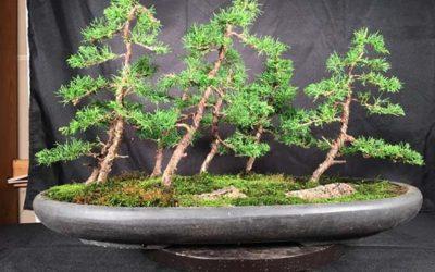 Itoigawa Bonsai Forest Workshop