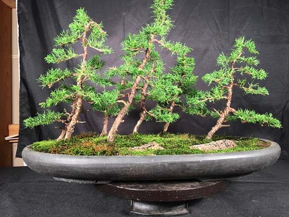 Itoigawa Bonsai Forest Workshop