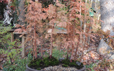 Dawn Redwood Forest Workshop